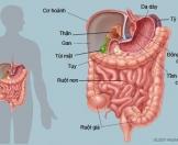 Tầm soát ung thư Dạ dày và Đại trực tràng
