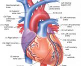 Nâng cao:Tầm soát chuyên Tim mạch